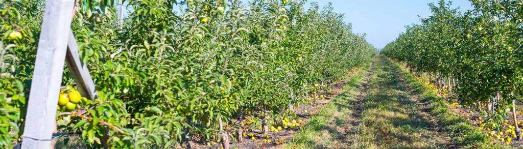 campo de frutales